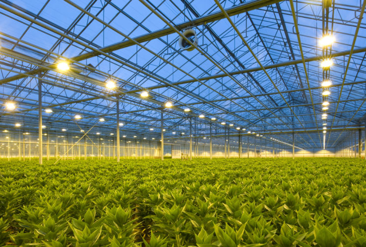Picture of a cannabis greenhouse with an HPS lighting design in in United States (US) and Canada
